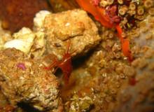 Karaburun Underwater